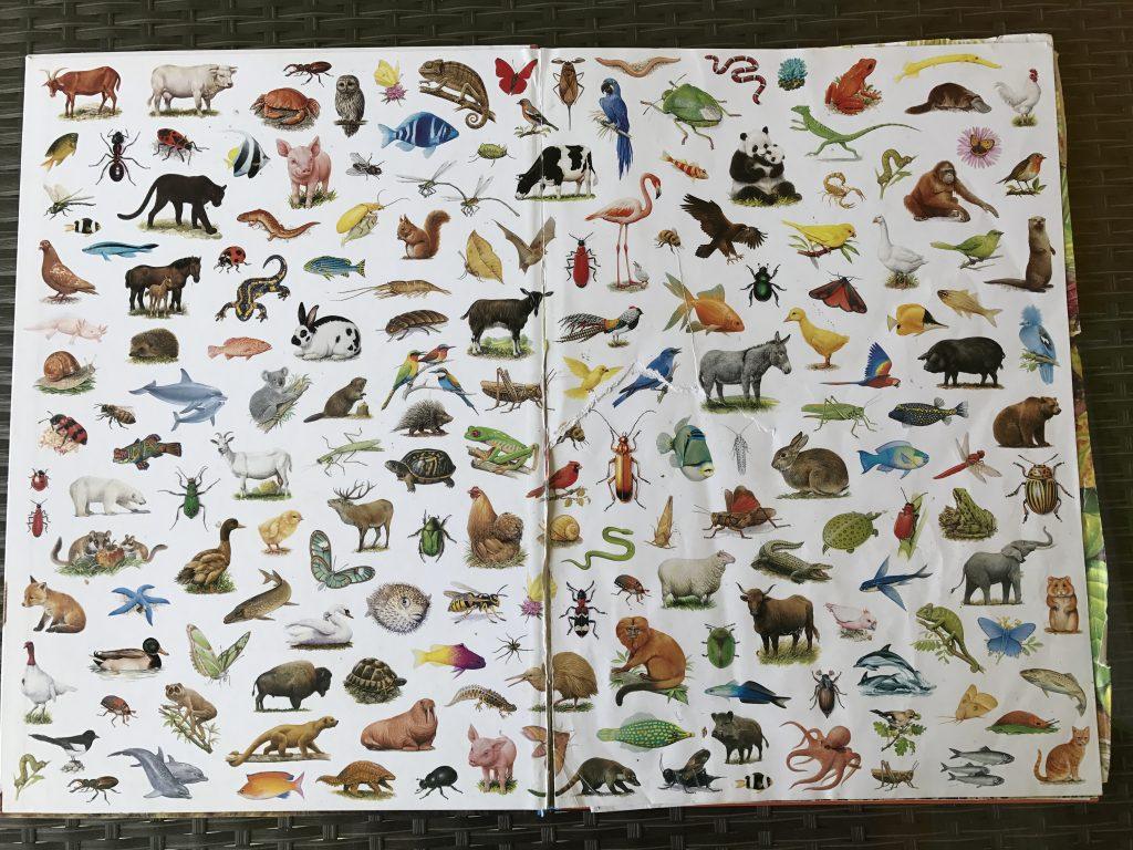 l'imagier des animaux de André Boos ensemble des animaux