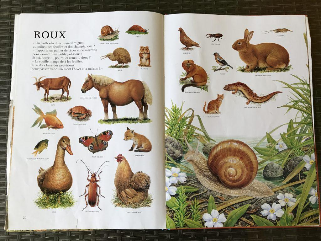 l'imagier des animaux de André Boos - ROUX